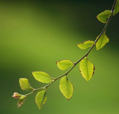 Fotobanka sbezplatnými fotkami na tému detail, ľahký, les, odtiene zelených