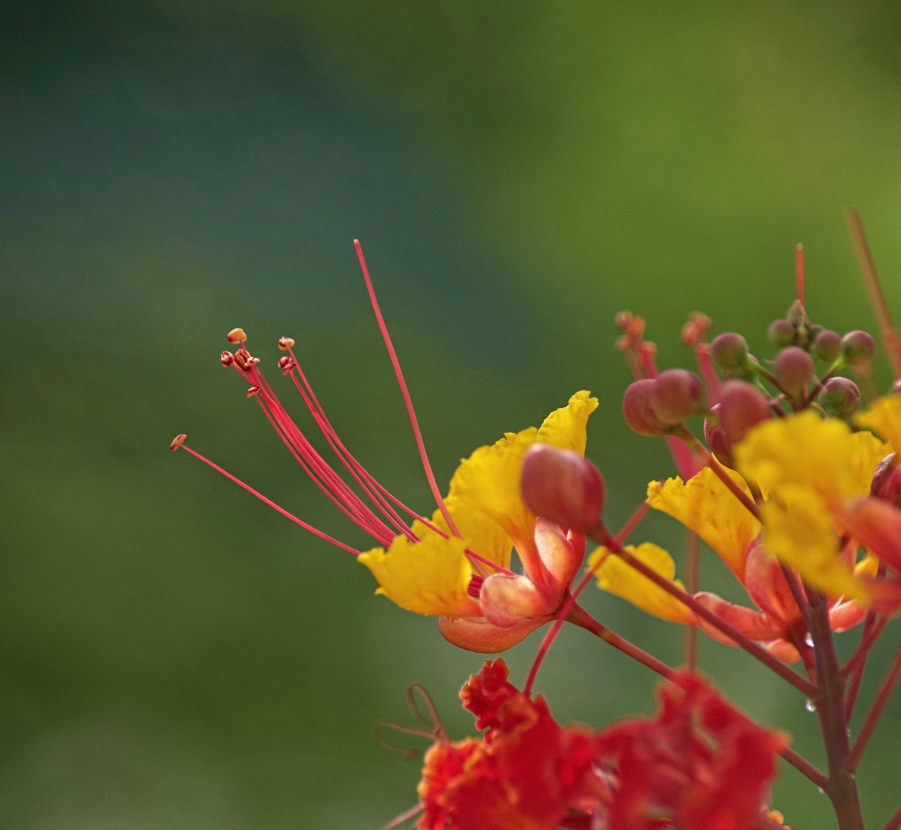 Free stock photo of light, red, flowers, yellow