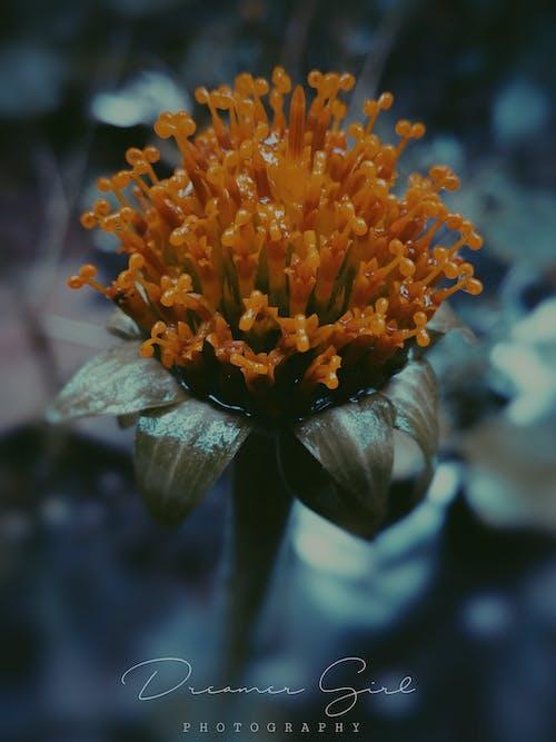 4Kの壁紙, Adobe Photoshop, 愛, 美しい花の無料の写真素材