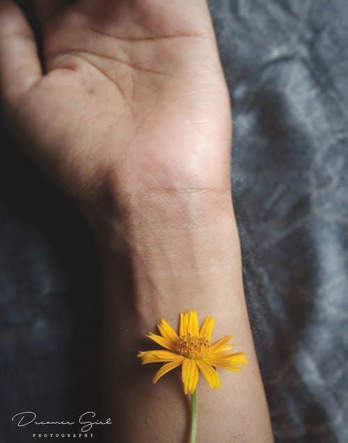 el, sarı içeren Ücretsiz stok fotoğraf