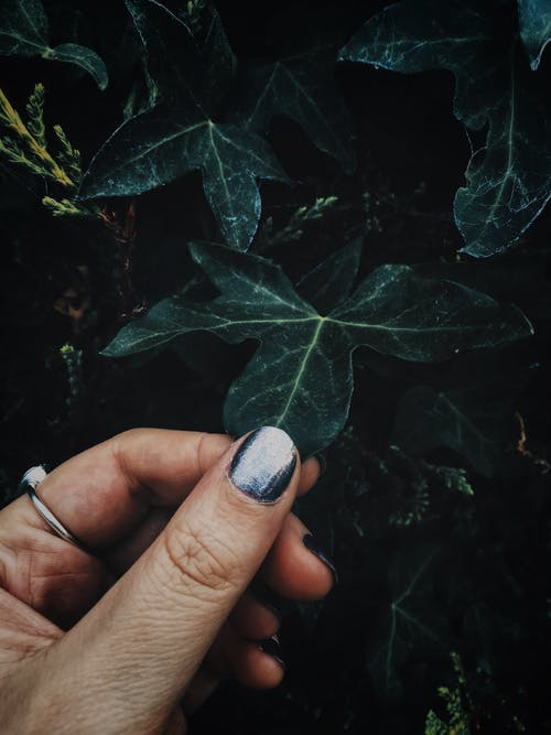 Woman Holding Green Leafed Plant