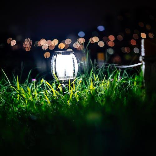Gratis arkivbilde med gress, grønn, lett, natt