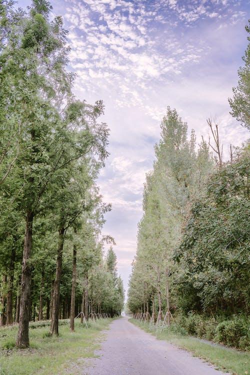 คลังภาพถ่ายฟรี ของ ถนน, สีเขียว