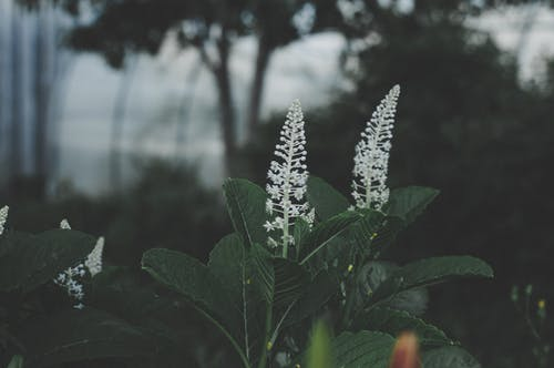 White Cluster Flower