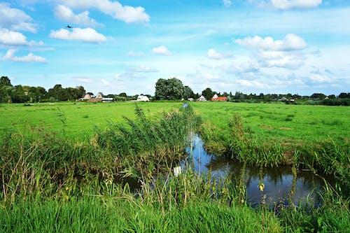 Free stock photo of amstelveen, ditch, Dutch landscape, grass