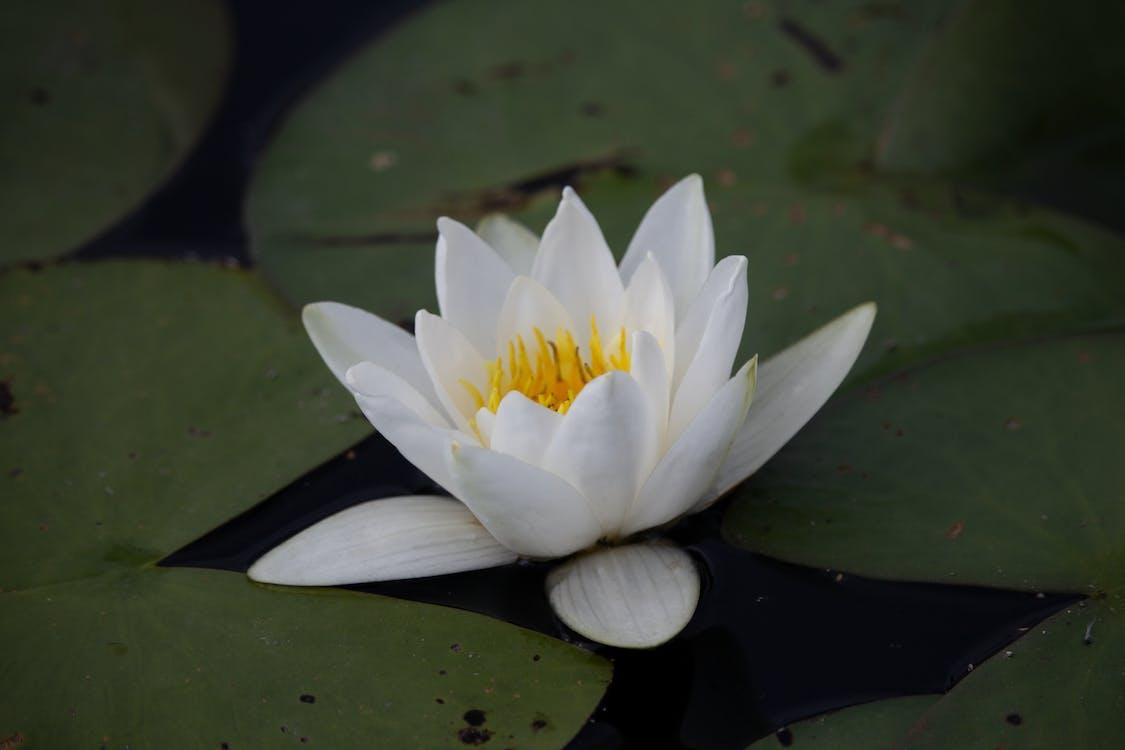 blomst, refleksjon, speilbilde
