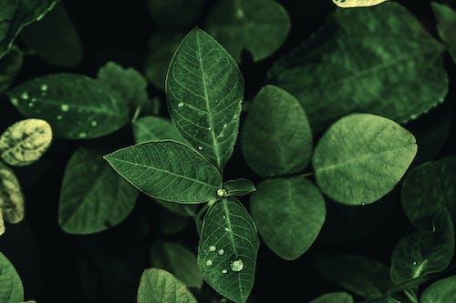 Free stock photo of dark green plants, green, green leaf