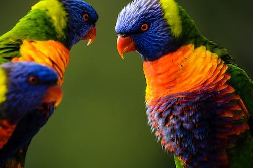 Бесплатное стоковое фото с абстрактное фото, абстрактный фон, апельсин, голубой