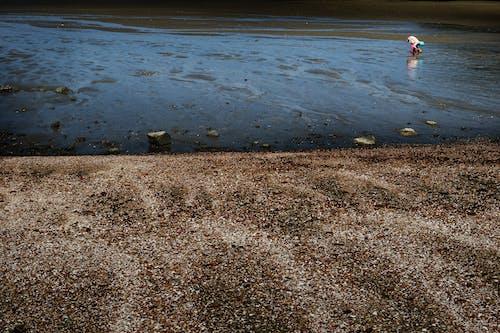 Darmowe zdjęcie z galerii z życie morskie