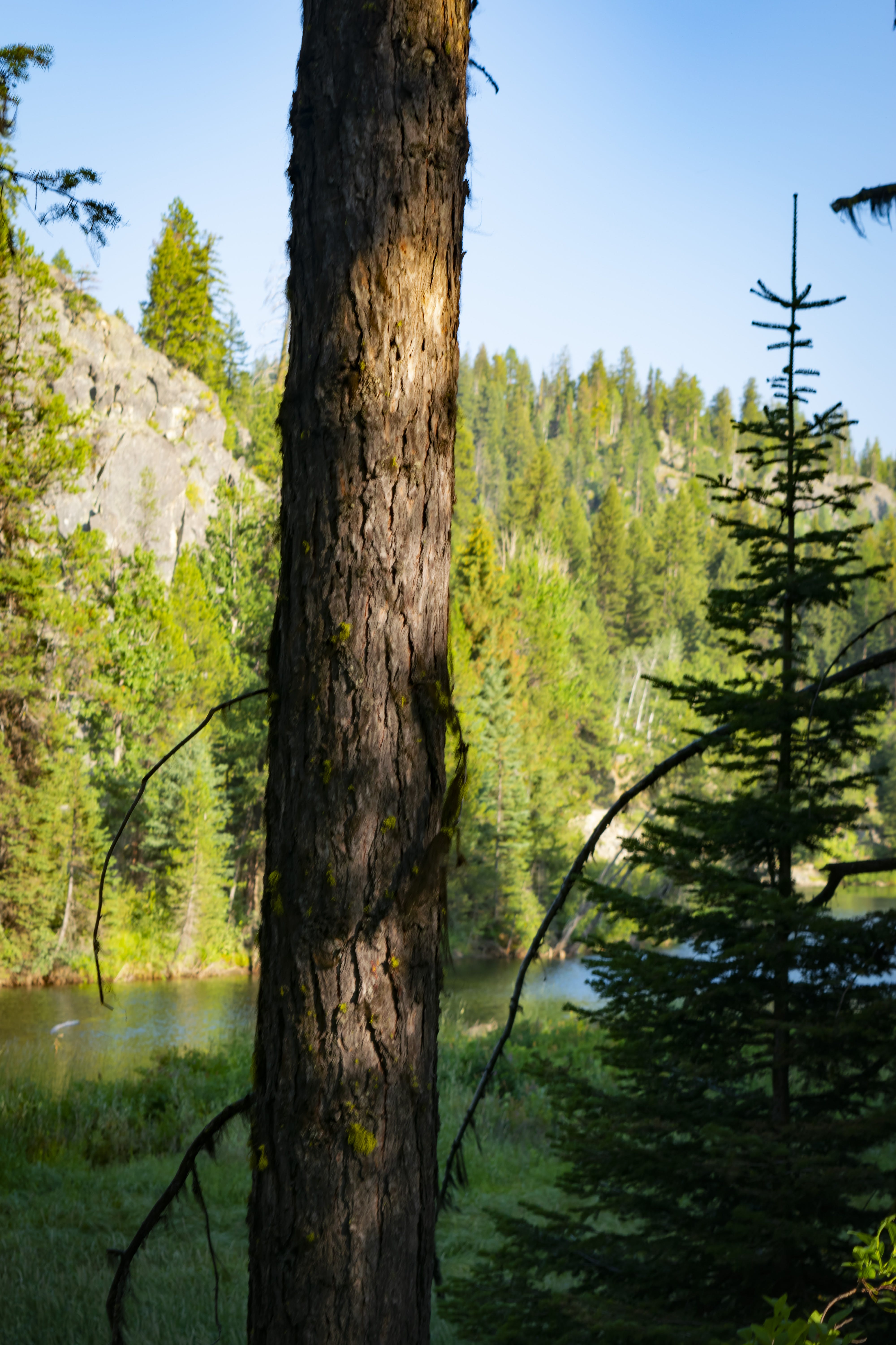 Free stock photo of blue sky, camping, green trees, mother nature
