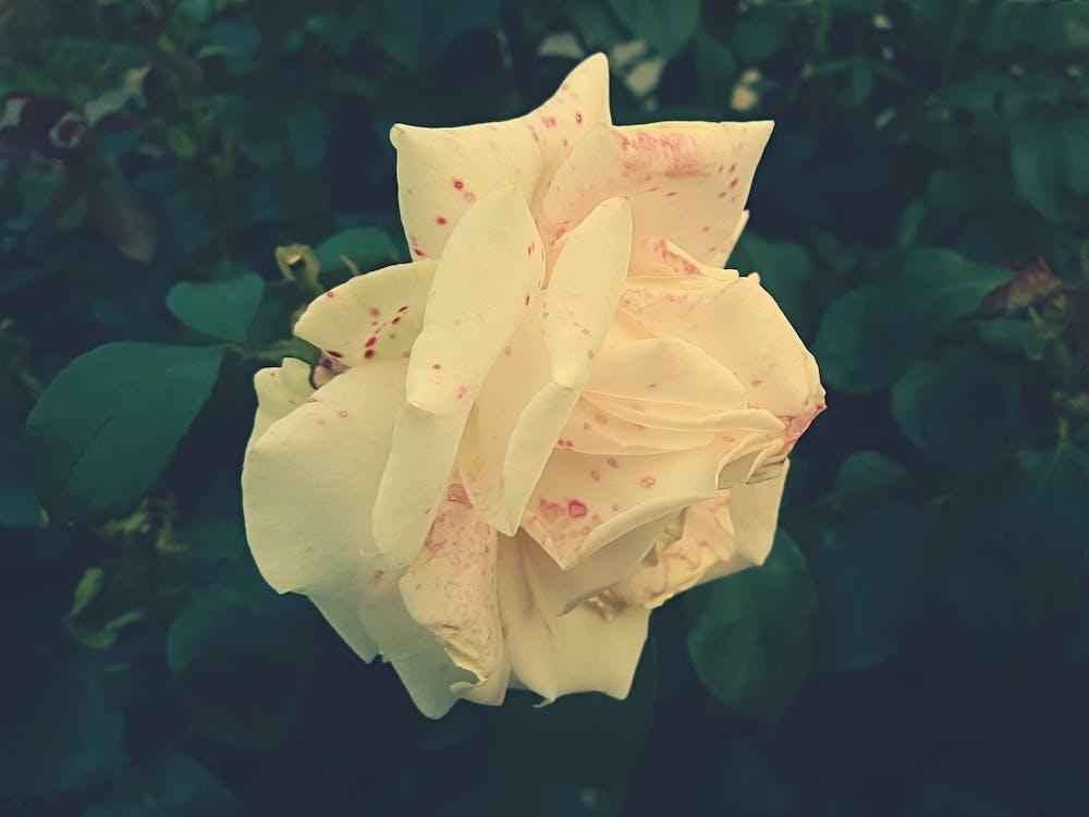 brillante, color, flor