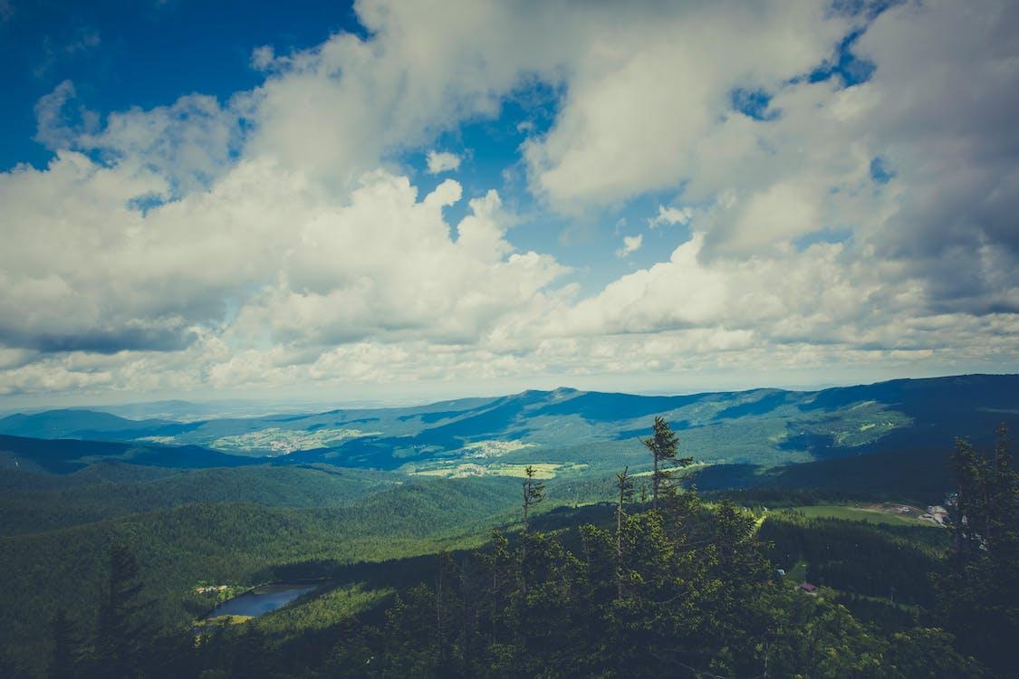 bäume, berg, biotop