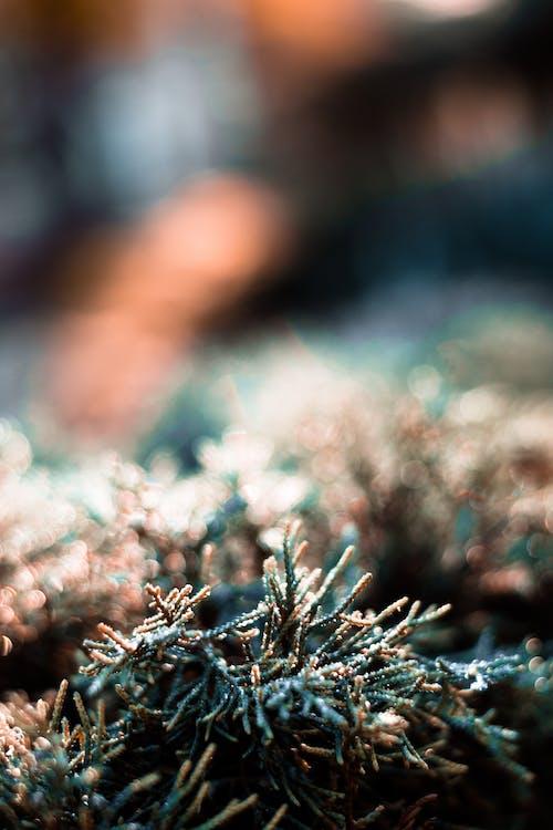 Foto profissional grátis de ecológico, erva, nascer do sol