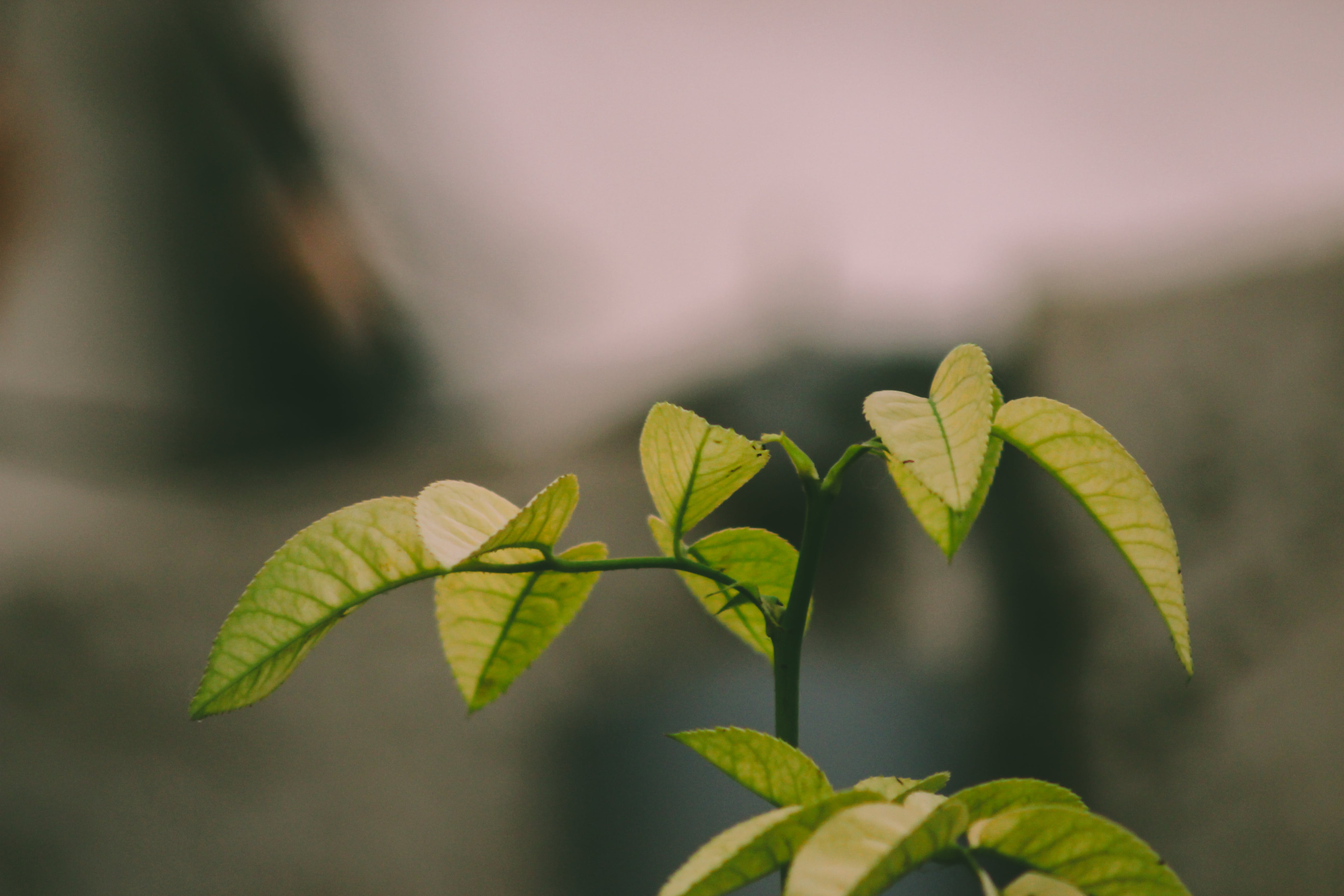Selective Photo Of Green Leafed Plant