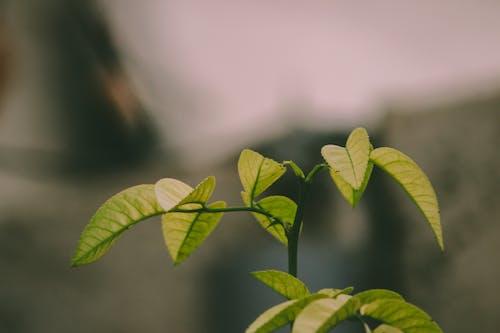 Fotos de stock gratuitas de crecimiento, macro, planta