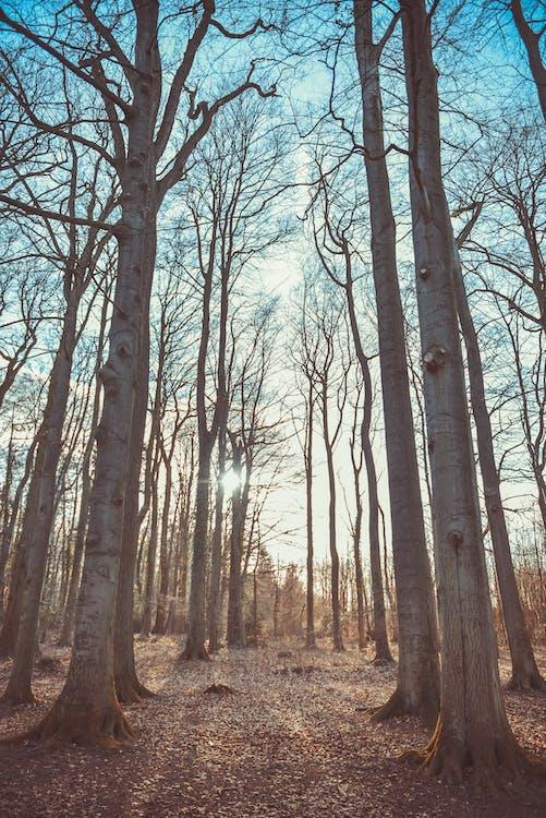 dagslys, grener, miljø