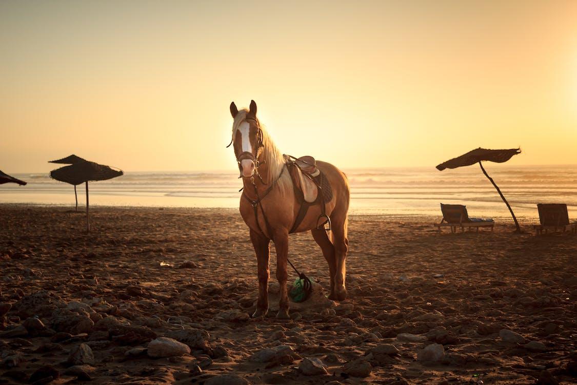 Horse on Sand