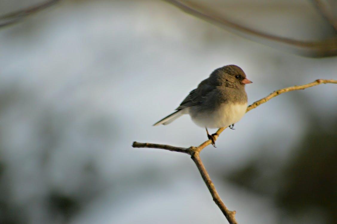 bangsa burung, bertengger, binatang