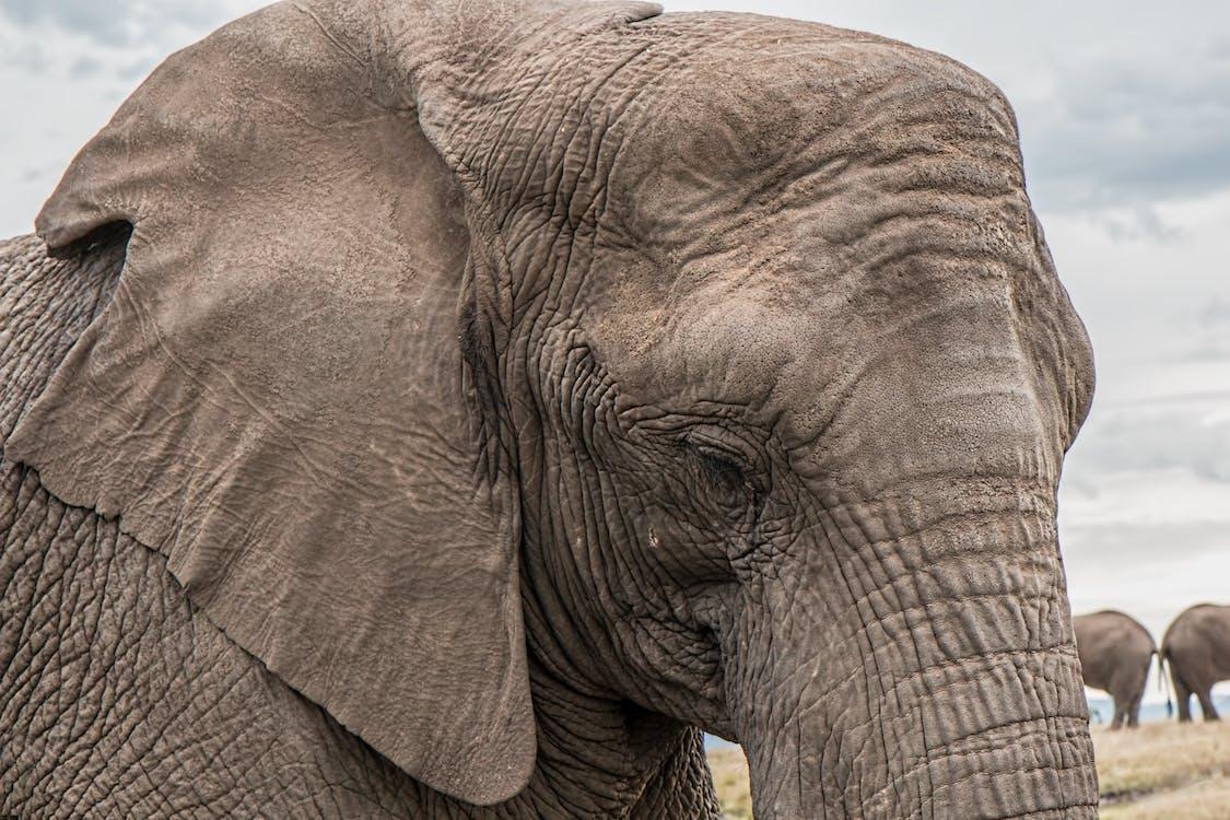 close-up, dyr, dyreliv