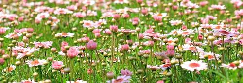Fotobanka sbezplatnými fotkami na tému divé kvety, flóra, hracie pole, ihrisko