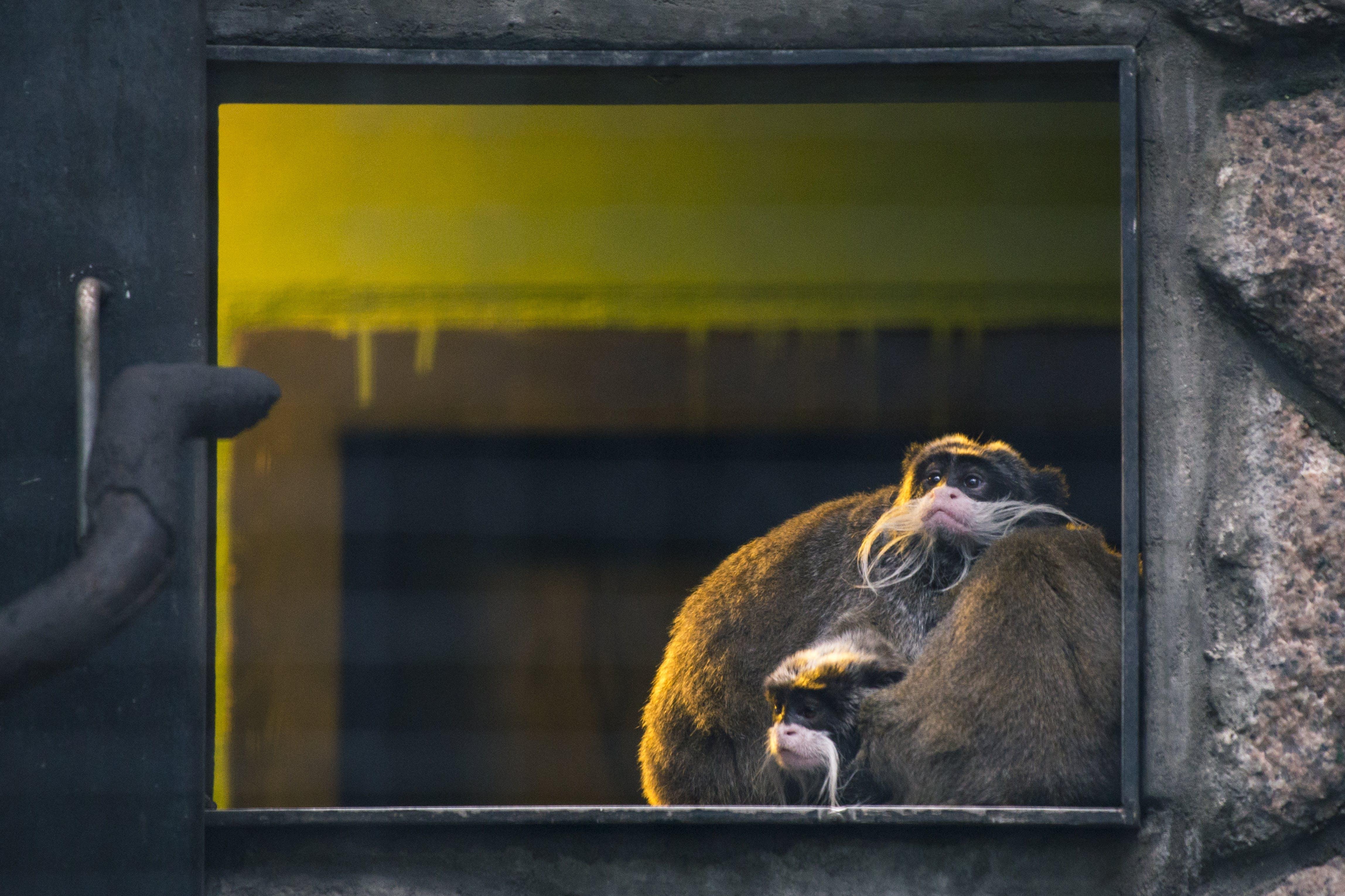 Δωρεάν στοκ φωτογραφιών με ασφάλεια, γούνα, εσωτερικοί χώροι, ζώο