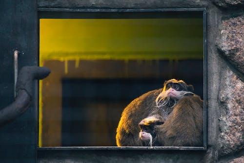 Foto stok gratis binatang, bulu, dalam ruangan, dinding