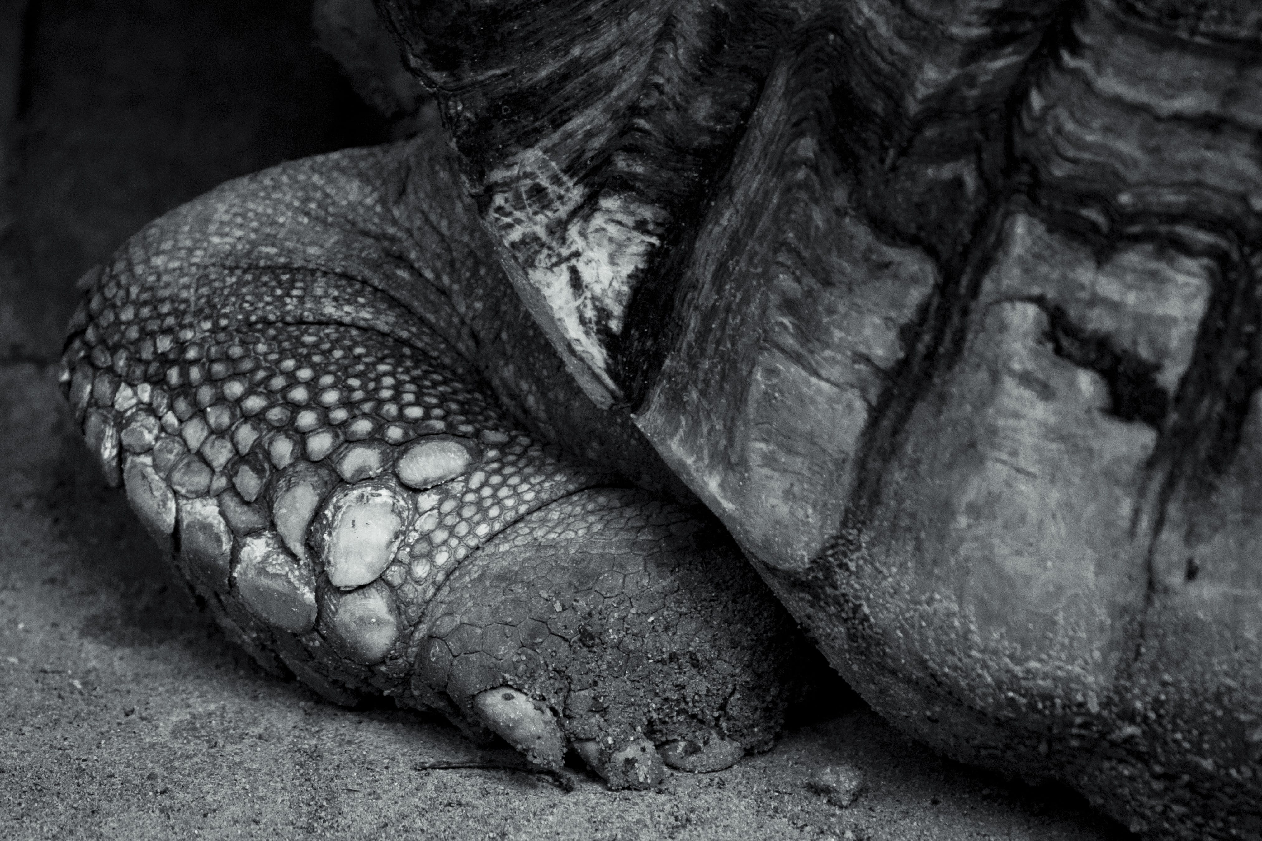 Free stock photo of animal, black and white, close-up view, feet