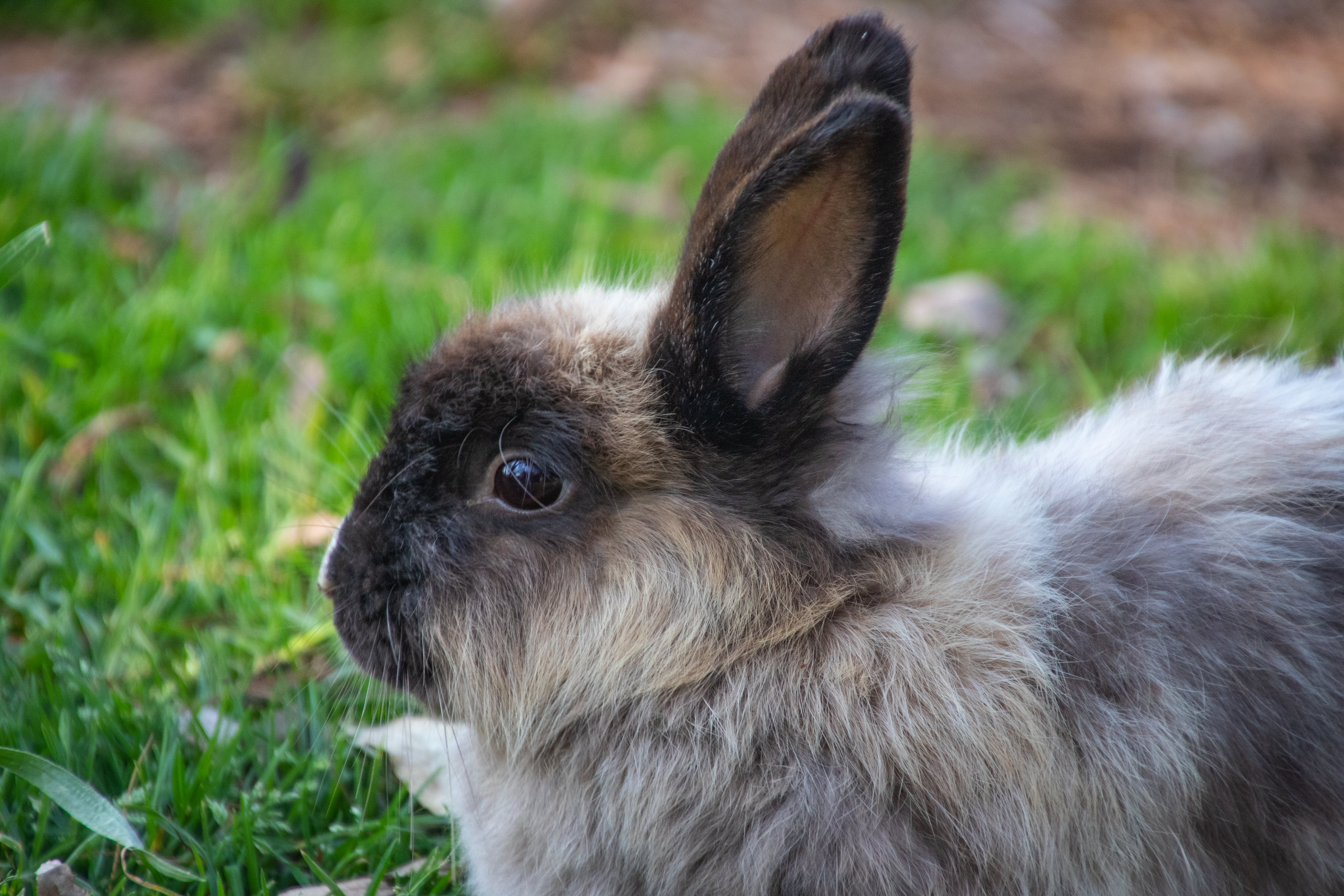 Shallow Focus Photography of Gray Rabbit
