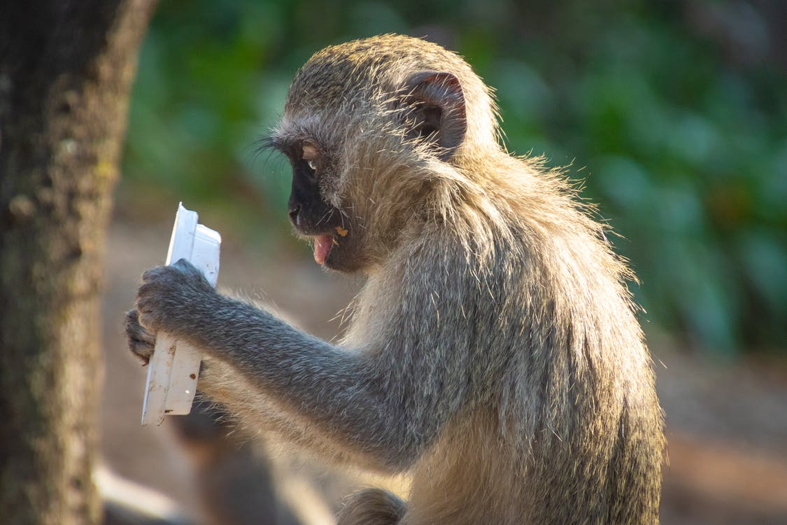 Shallow Focus Photography of Monkey Holding Plastic Lid