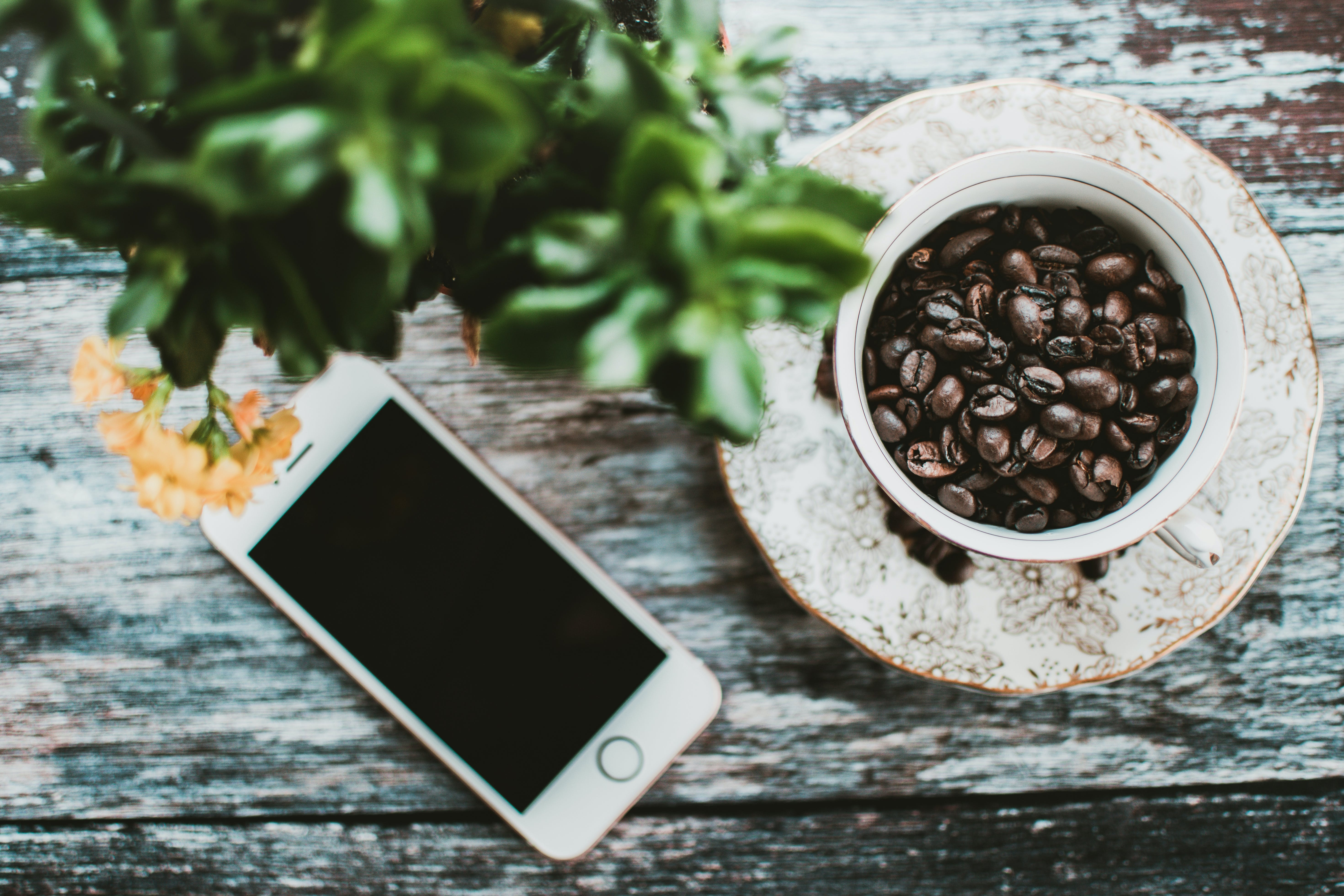 Turned-off Silver Iphone 5s Near Cup of Roaster Coffee Beans