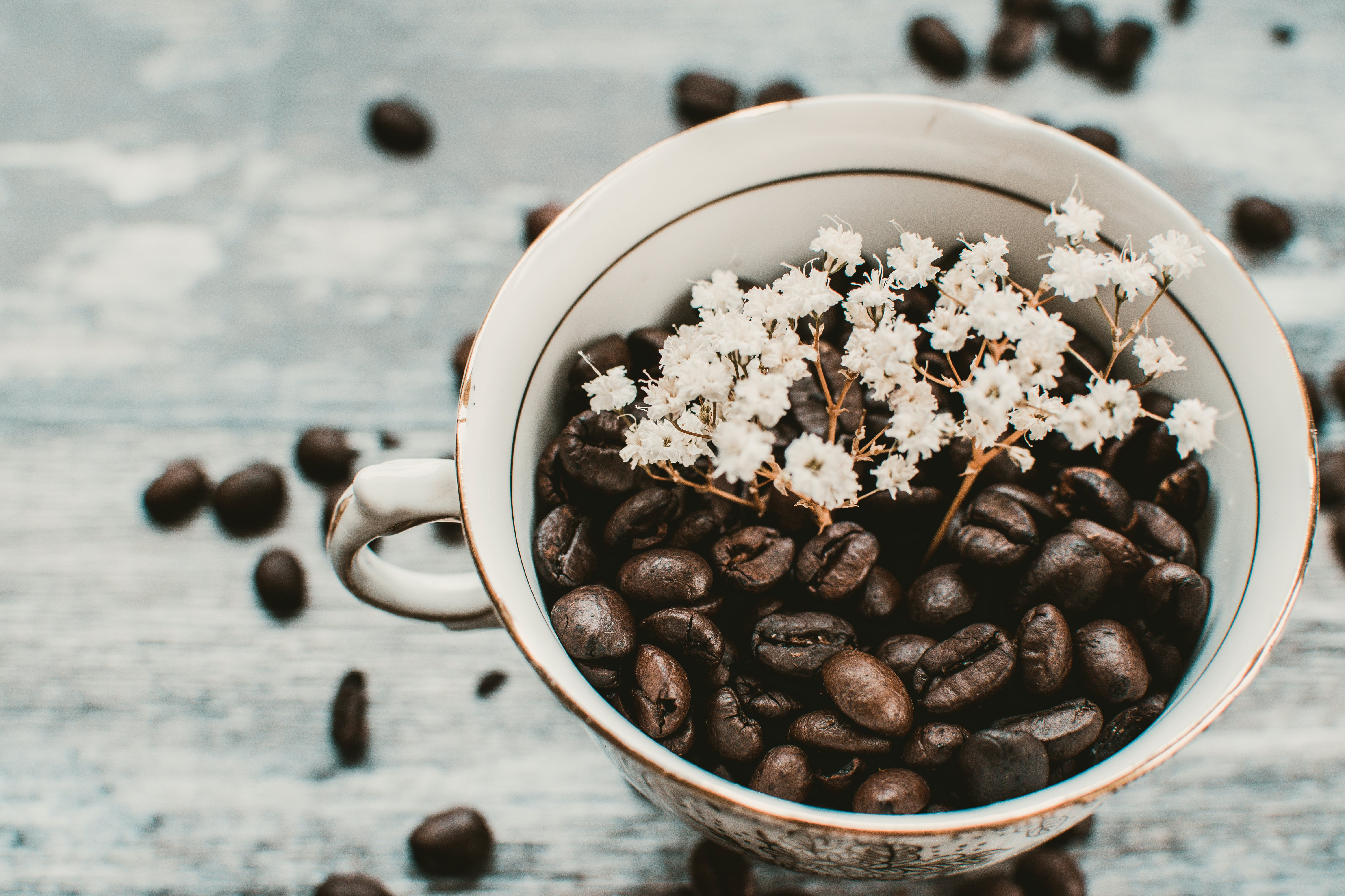 Coffee Beans in Mug With White Flowers on Focus Photo