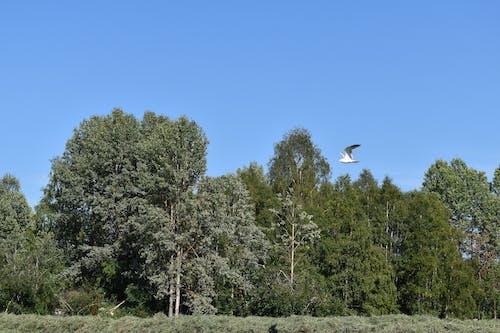 Photos gratuites de arbres, bleu, ciel, forêt