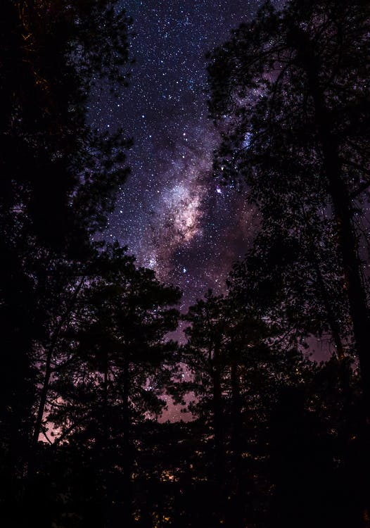 Trees Under Milky Way
