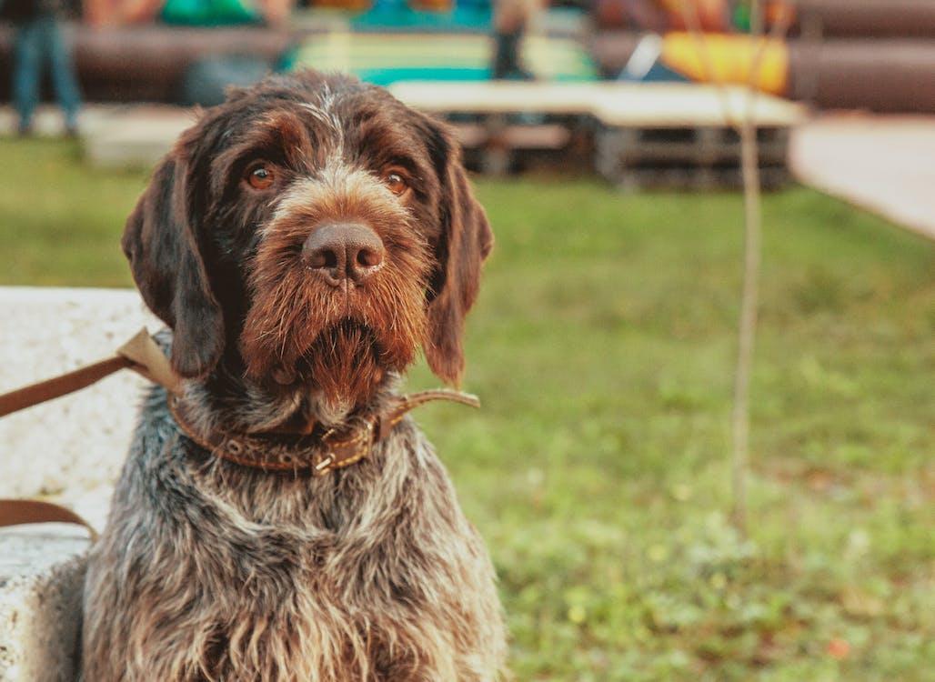 #dog, denní, dívání