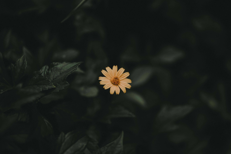 Yellow Flower Close-up Photo
