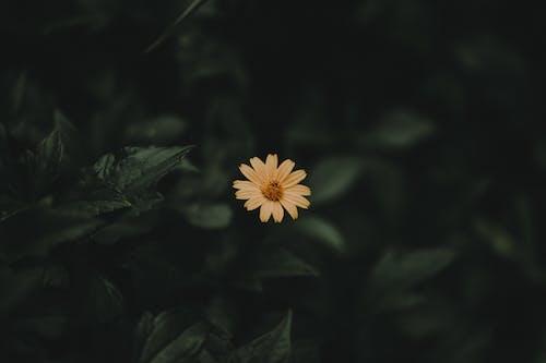 Gratis lagerfoto af blomst, blomstrende, close-up, farver