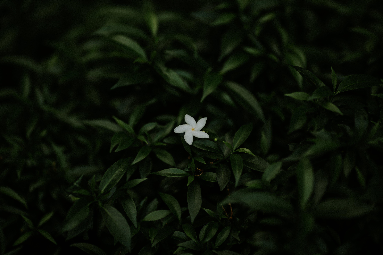 Imagine de stoc gratuită din alb, arbore, creștere, culori