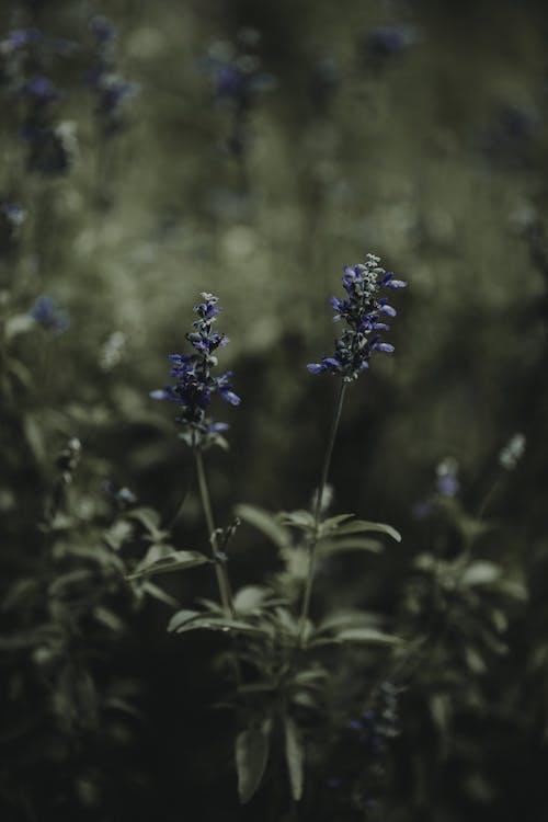 Ingyenes stockfotó elmosódott háttér, fényes, halványlila, közelkép témában