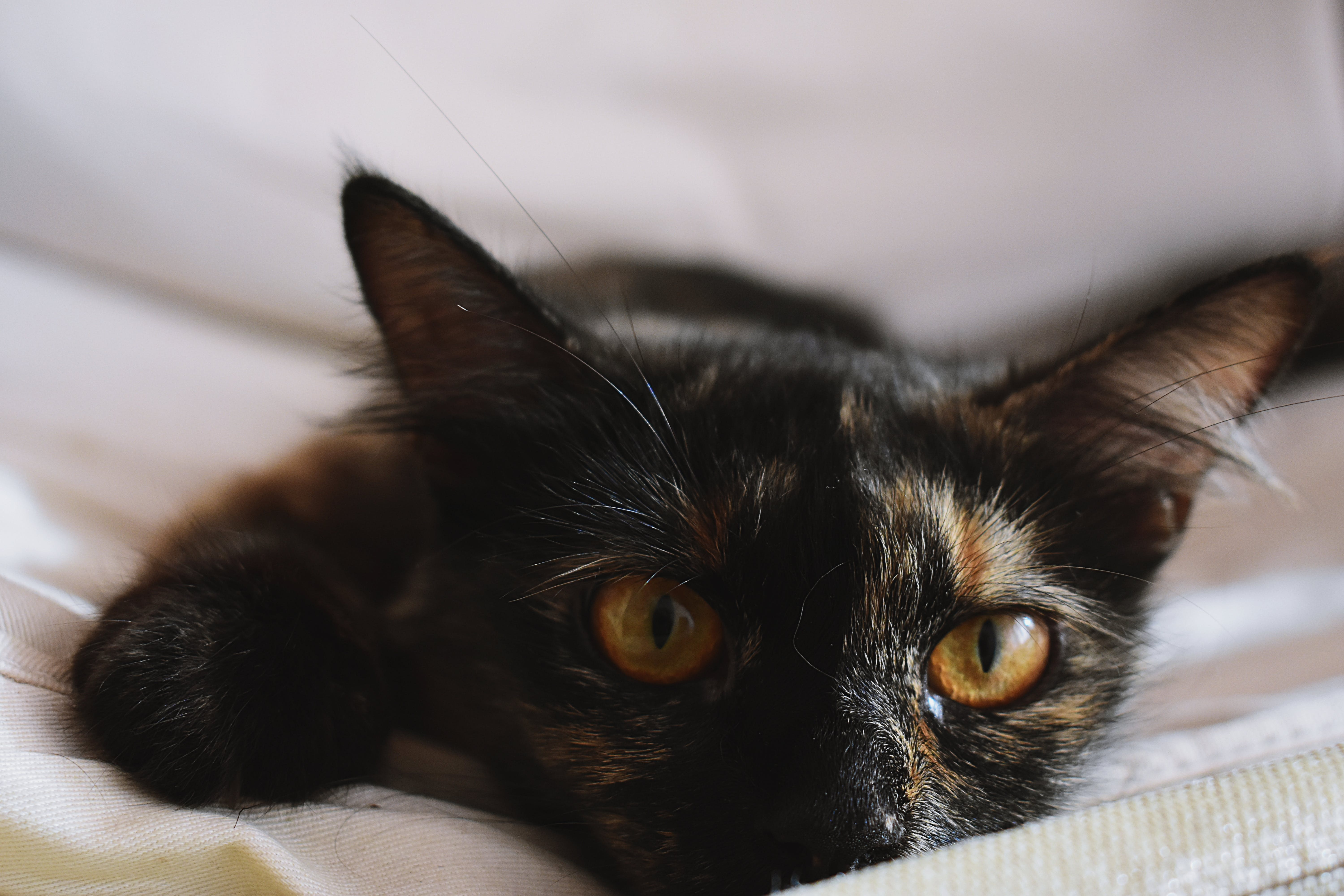 Selected-focus Photo of Black Kitten Leaning on White Mattress