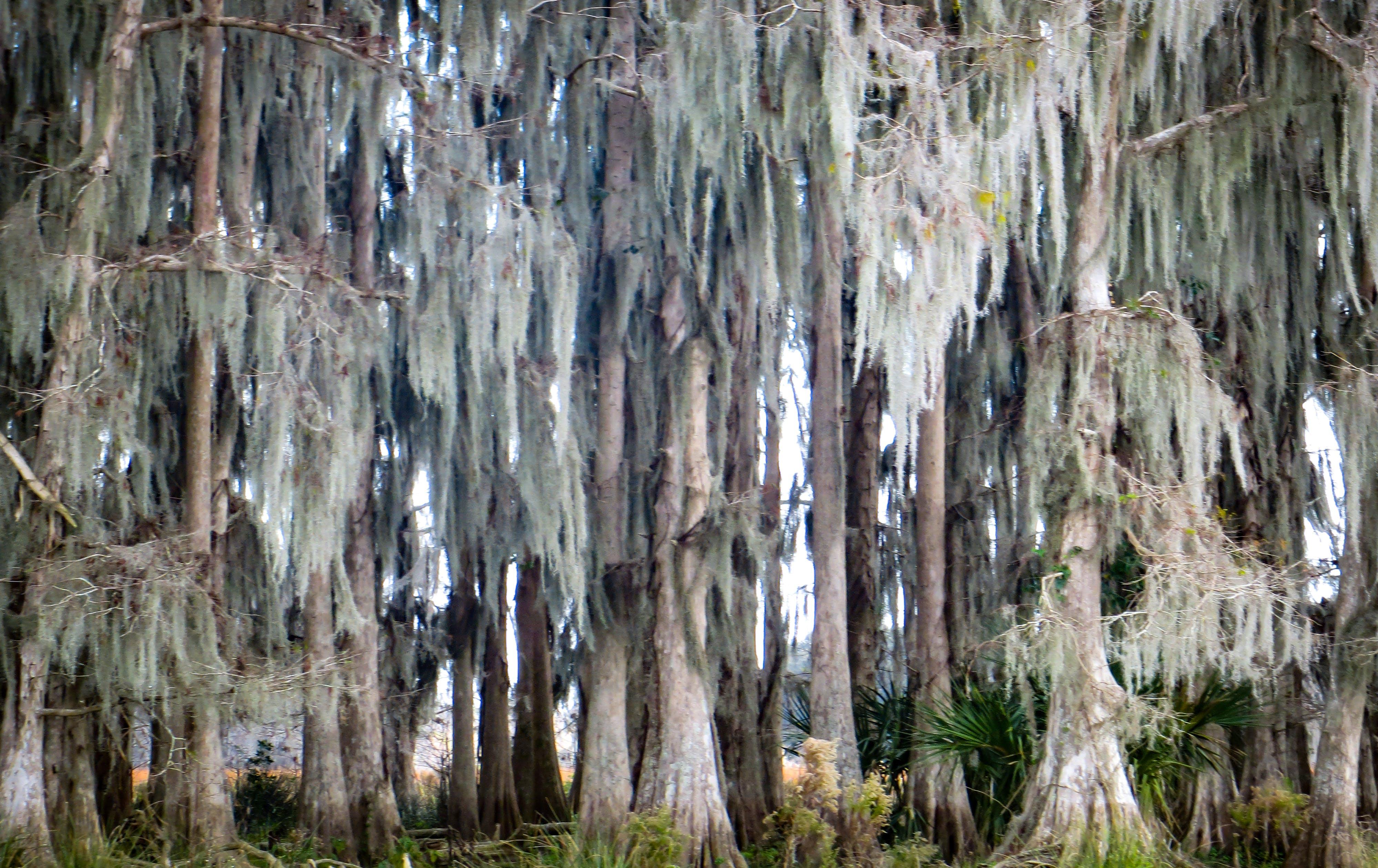 Free stock photo of nature, moss, tree, parasite