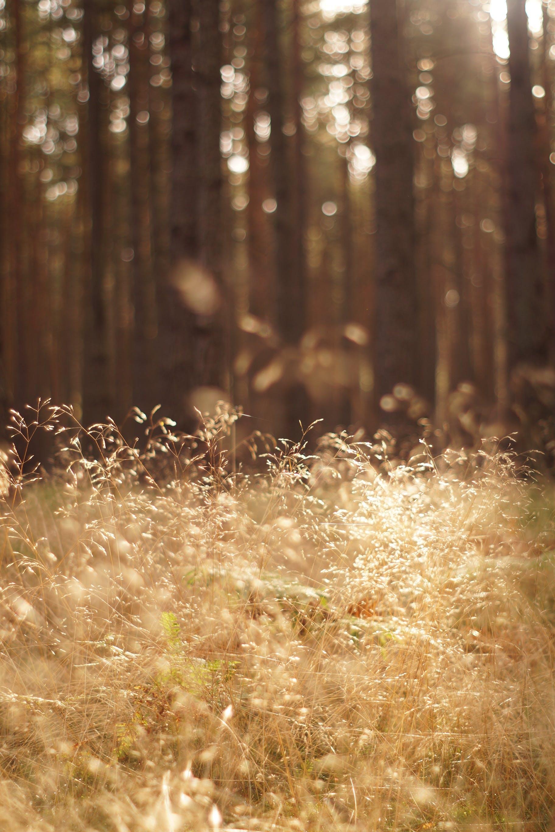 Kostenloses Stock Foto zu goldene sonne, gras, holz, sommer