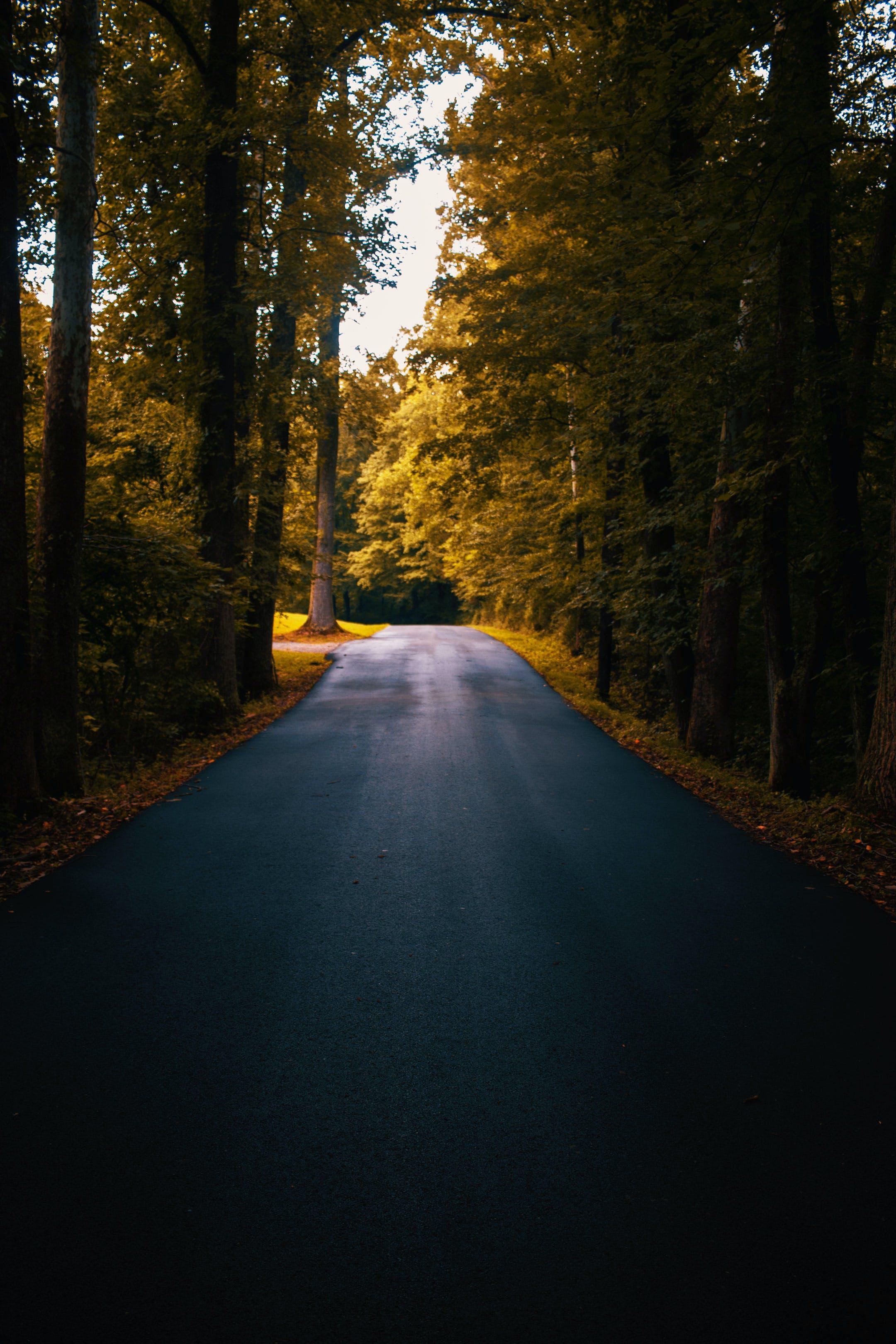 Concrete Road Between Trees