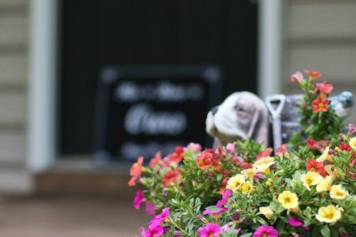Gratis lagerfoto af assorteret, blomster, blomstrende, close-up