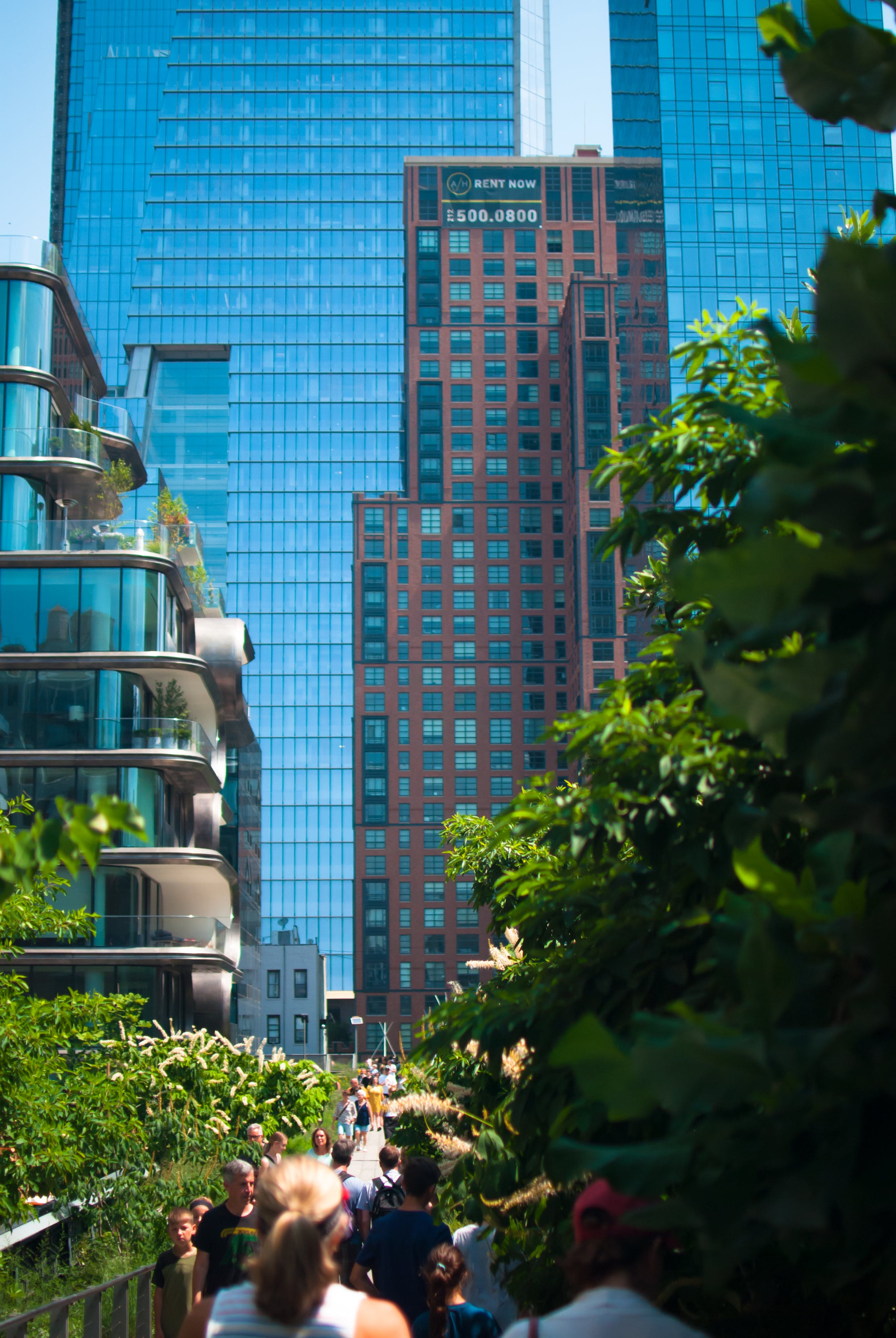 Free stock photo of garden, highline, jungle, new york
