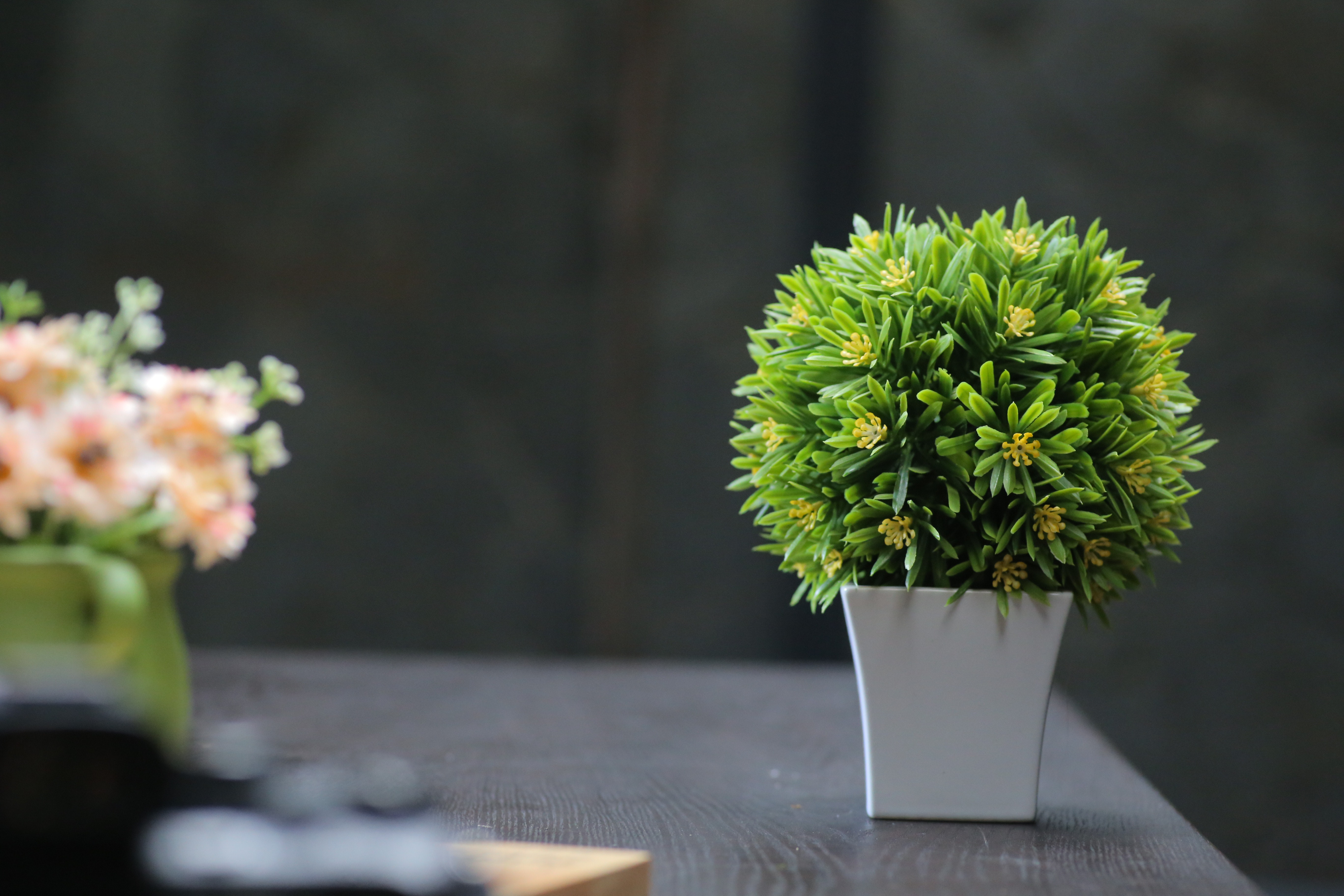 Selective Focus Photography of Green Leafed Plants & 1000+ Interesting Flower Pot Photos · Pexels · Free Stock Photos