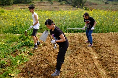 Бесплатное стоковое фото с искренний, китай, меньшинства, сельское хозяйство