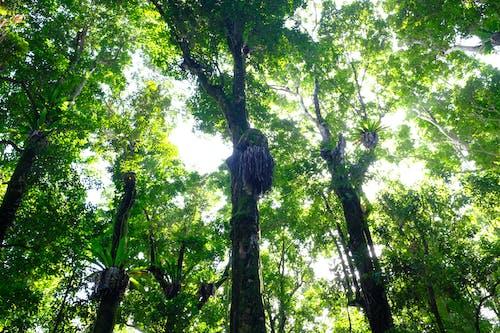 Gratis stockfoto met Australië, bomen, Bos, cairns