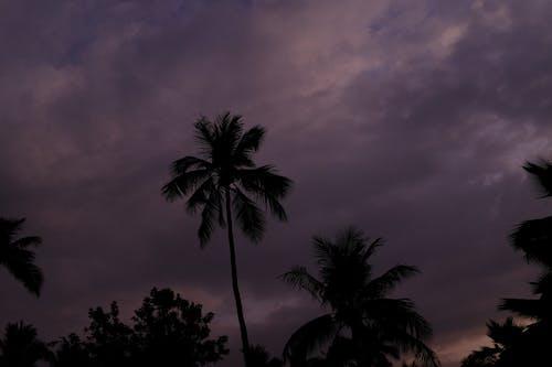 Gratis stockfoto met bomen, contrast, paars, Thailand