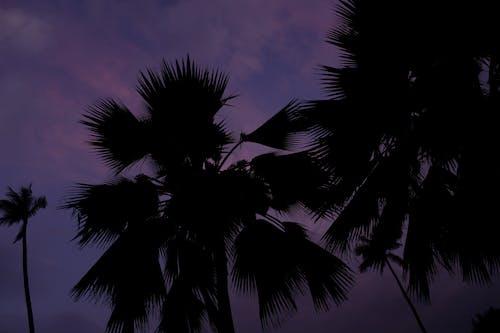 Gratis stockfoto met bomen, contrast, koh samui, paars