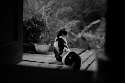Grayscale Photography of Two Bicolor Cats Near Plant